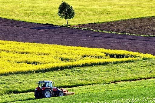 11/02/2019. Tractor labrando en un campo