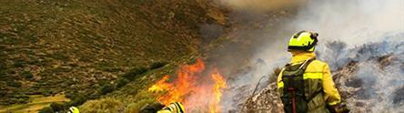 Efectivos trabajando en la extinción de un incendio forestal