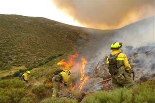 Efectivos terrestres durante la extinción de un incendio forestal